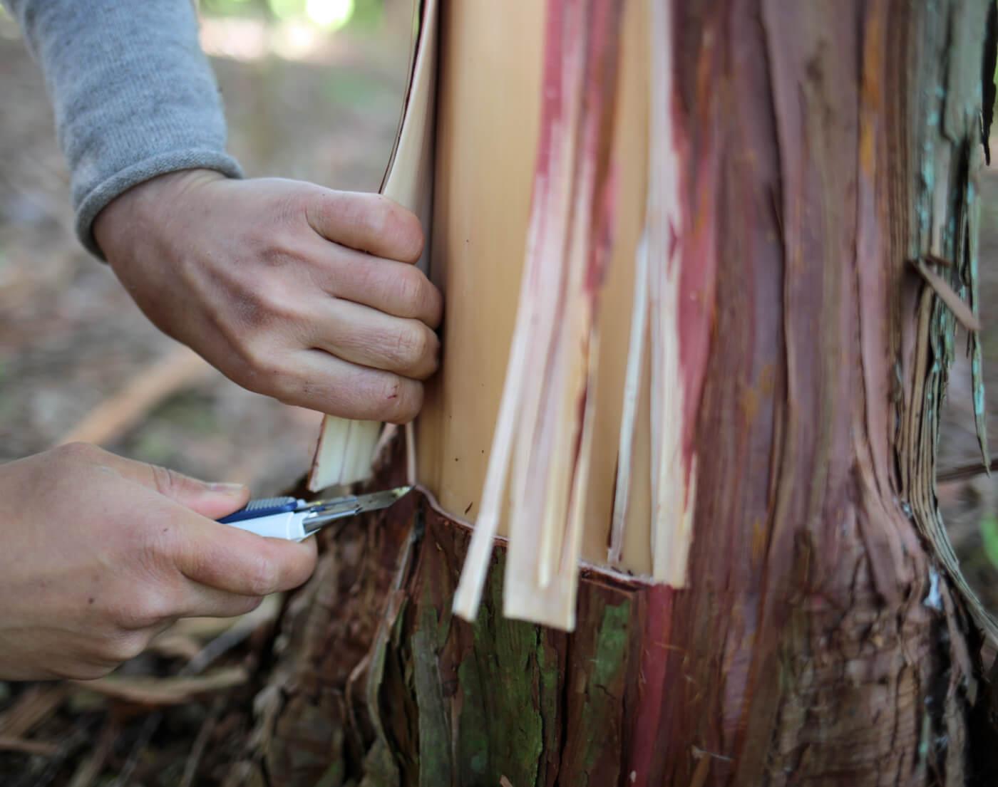檜の皮のアイキャッチ画像