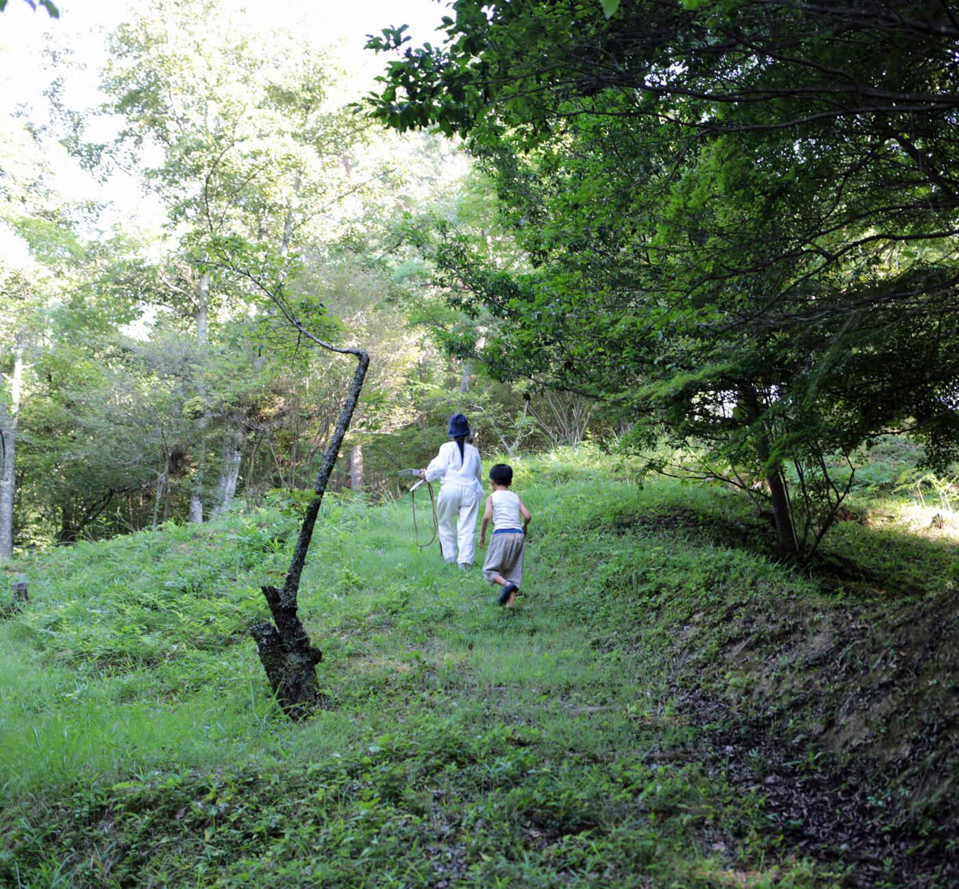 苔の採集のアイキャッチ画像
