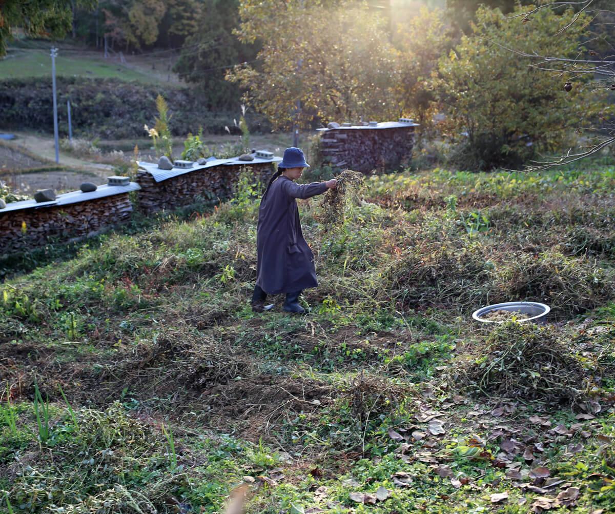 収穫物のアイキャッチ画像