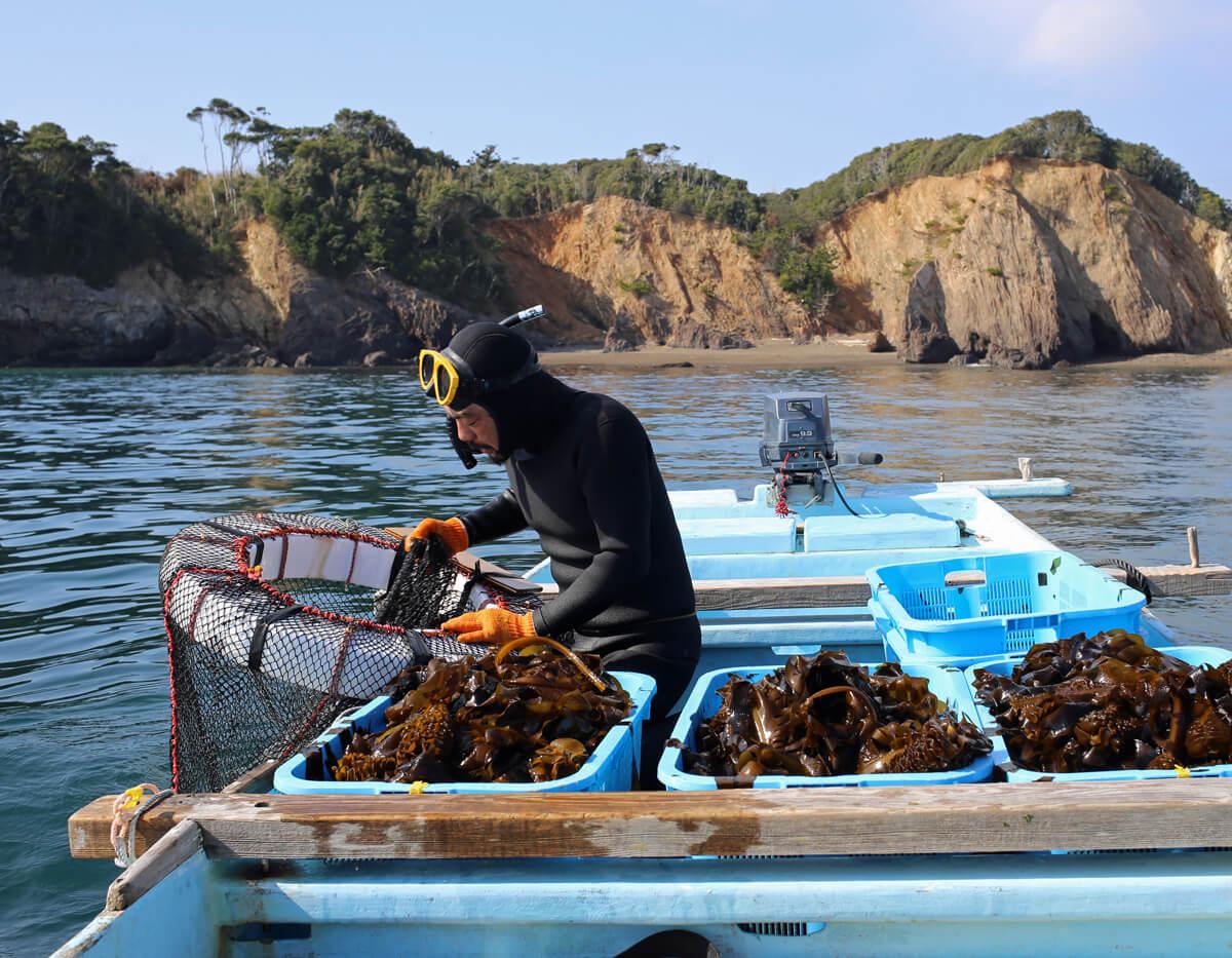 海の子かぞくの海藻のアイキャッチ画像